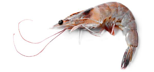 La CONAPESCA refrend� su compromiso de continuar fortaleciendo el manejo de la pesca del camar�n con acciones de ordenamiento.